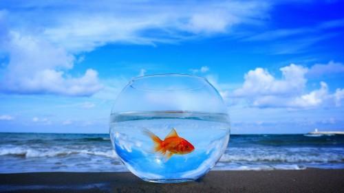 Как сохранить чистоту и красоту в аквариуме