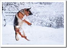 Уход за собакой в зимнее время